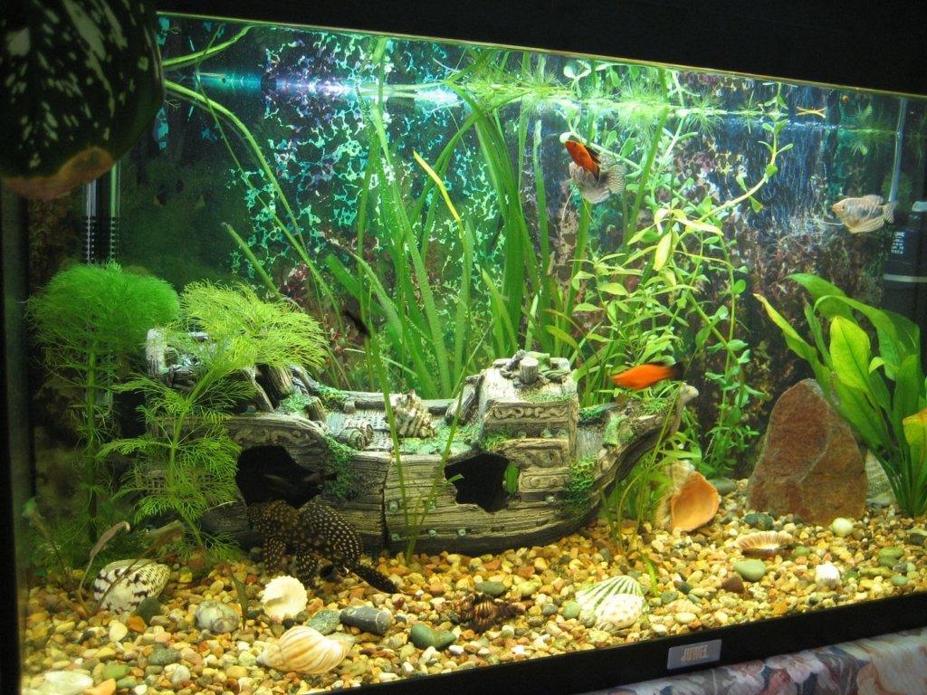 Маленький аквариум фото 3